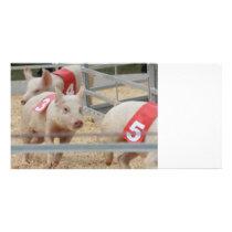 Pig racing pink piglet number three card