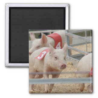 Pig racing pink piglet number three fridge magnets