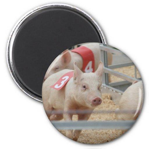 Pig racing pink piglet number three refrigerator magnet