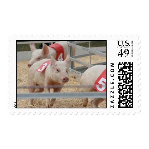 Pig racing pink piglet number three postage