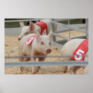 Pig racing pink piglet number three poster