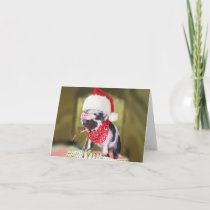 Pig santa claus - christmas pig - piglet holiday card