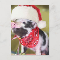 Pig santa claus - christmas pig - piglet holiday postcard