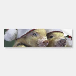 Pig santa claus - christmas pig - three pigs bumper sticker