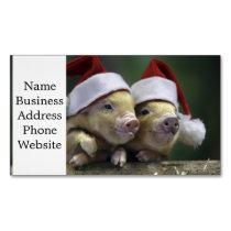 Pig santa claus - christmas pig - three pigs business card magnet