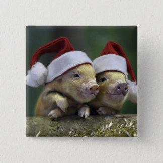 Pig santa claus - christmas pig - three pigs button
