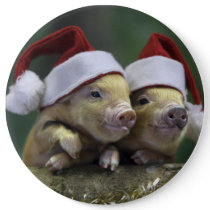 Pig santa claus - christmas pig - three pigs button