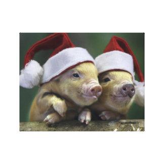 Pig santa claus - christmas pig - three pigs canvas print