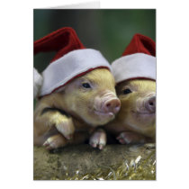 Pig santa claus - christmas pig - three pigs card