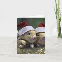 Pig santa claus - christmas pig - three pigs holiday card