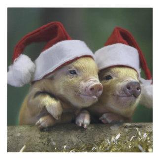 Pig santa claus - christmas pig - three pigs panel wall art
