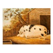 Pig Spotted Hog Vintage Farm Painting Postcard
