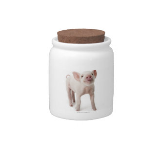 Pig Standing Looking Up Candy Jar