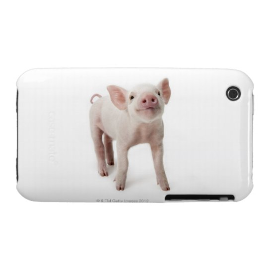 Pig Standing Looking Up iPhone 3 Case-Mate Case