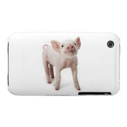 Pig Standing Looking Up iPhone 3 Covers