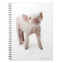Pig Standing Looking Up Notebook