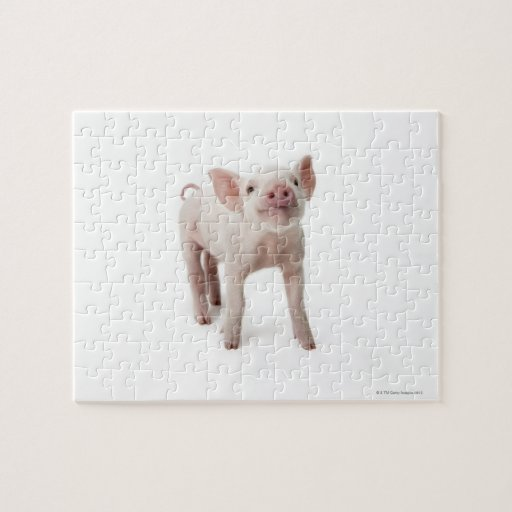 Pig Standing Looking Up Puzzle