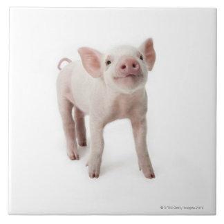 Pig Standing Looking Up Ceramic Tile