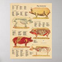 Pig Veterinary Anatomy Chart
