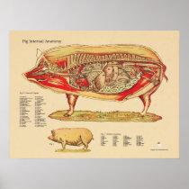 Pig Veterinary Internal Anatomy Chart