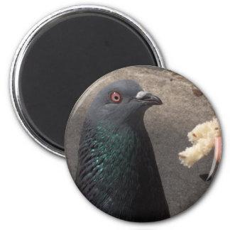 pigeon 2 inch round magnet