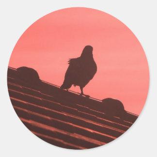 pigeon adesivos redondos