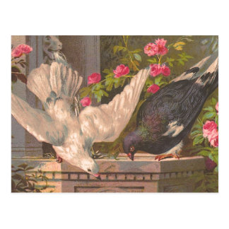 """Pigeon and White Dove"" Vintage Postcard"