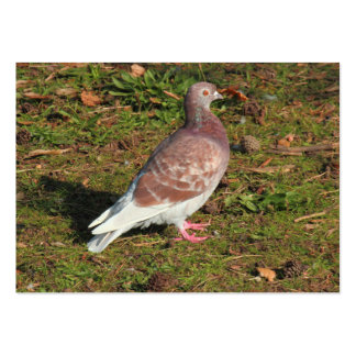 Pigeon at Roath Park Lake Cardiff Large Business Cards (Pack Of 100)