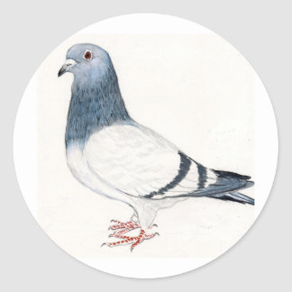 Pigeon Bird Art Sticker