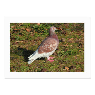 Pigeon (Bordered) Large Business Card