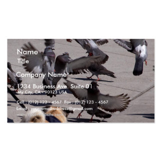 Pigeon Business Card Templates