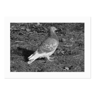Pigeon BW (Bordered) Large Business Card