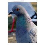 Pigeon Cards
