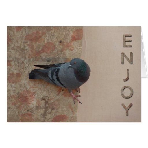 pigeon celebration card