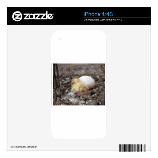 Pigeon chick in the nest with his brother egg iPhone 4 decal