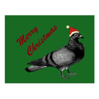 pigeon christmas postcard