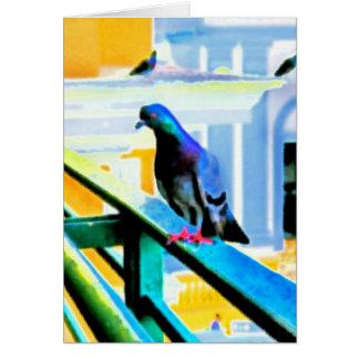 Pigeon de El Convento ~ Greeting Card