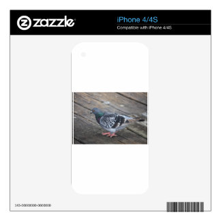 Pigeon Decals For iPhone 4S