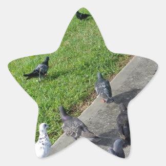 pigeon family reunion.JPG Star Sticker