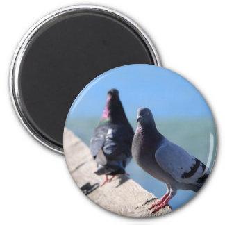 Pigeon Fridge Magnets
