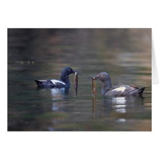 Pigeon Guillemot, Salish Sea, Washington State Card