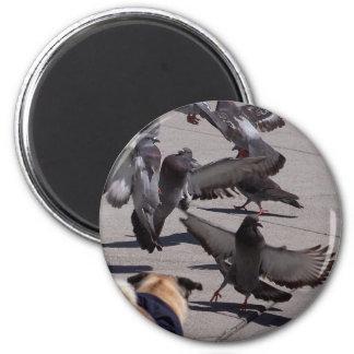 Pigeon Refrigerator Magnets