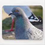 Pigeon Mouse Pads