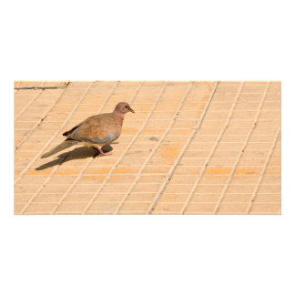 Pigeon Personalized Photo Card
