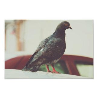 Pigeon Photo Art