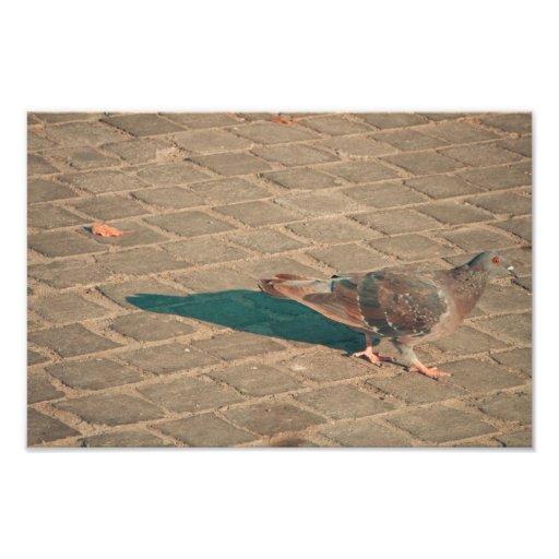 Pigeon Art Photo