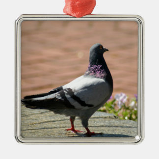 Pigeon Photograph Metal Ornament