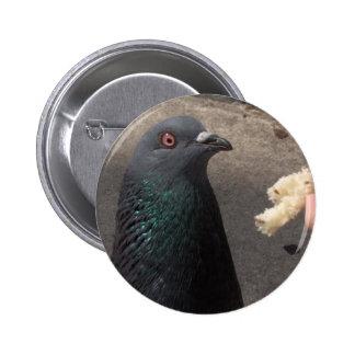 pigeon pinback button