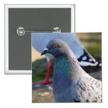 Pigeon Pinback Buttons
