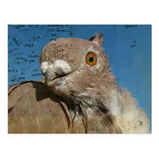 Pigeon Poetry Postcard